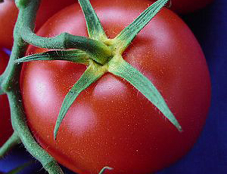 Tomato How To I.D. Genetically Modified Food at the Supermarket