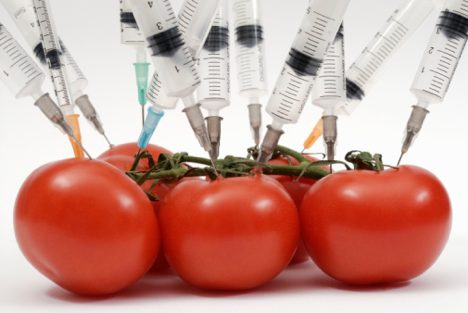 gmo tomatoes Over 270,000 Organic Farmers Sue Monsanto