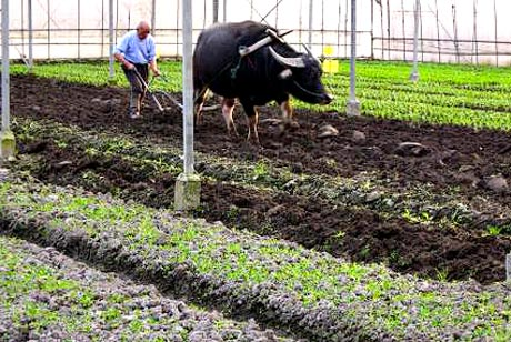 Beijing Organic Farm Development Chinese Party Officials Maintain Secret Organic Gardens