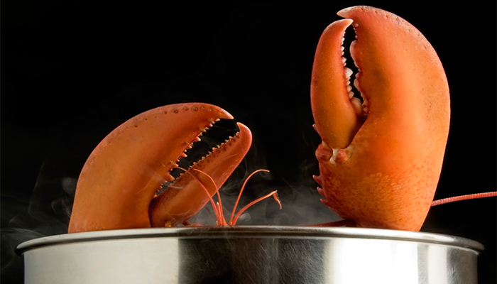 Crabs and Lobsters Feel Pain When Boiled Alive
