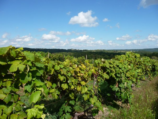 arbor hill vineyards
