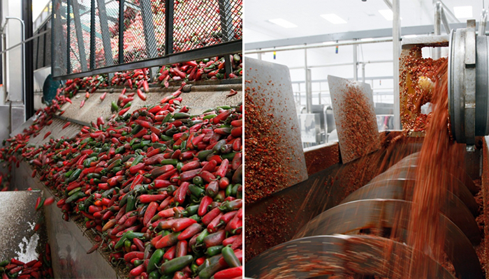 grinding-of-chilis-for-sriracha-hot-chili-sauce