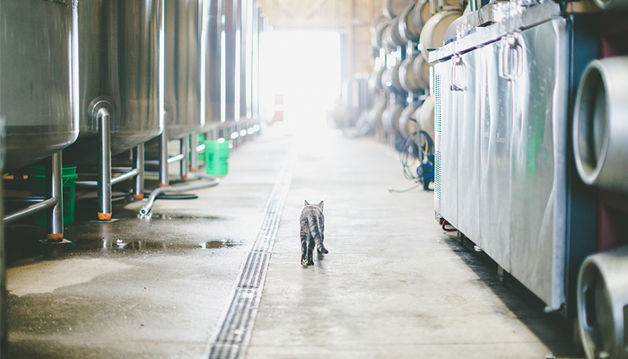 Good-Beer-Hunting-Pippin-the-cat-strolling-Virtue-Cider-tank-room